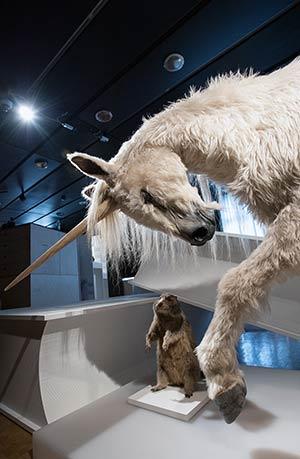 Bild: Zoologisches Museum der Universität Zürich